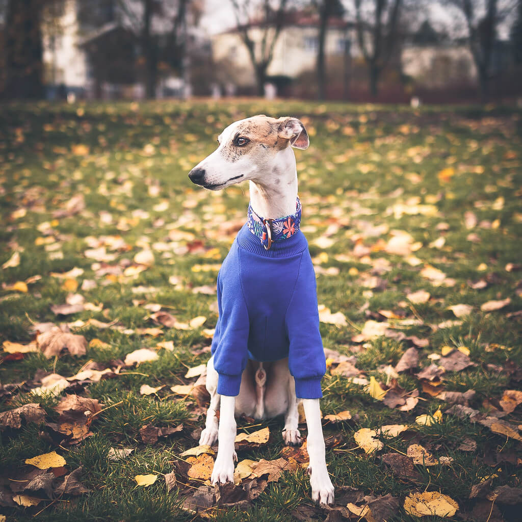 do whippets get separation anxiety?