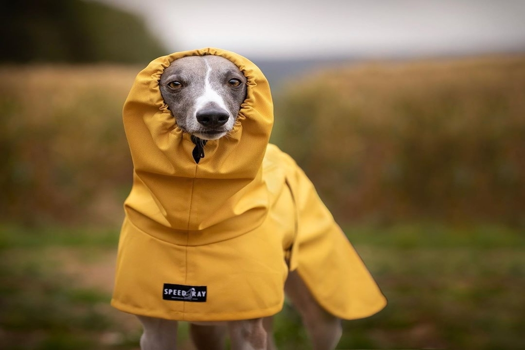 8 best dog coats for whippets