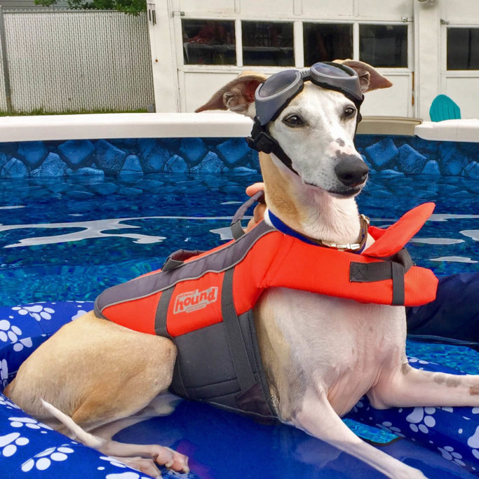 best life jackets for whippets