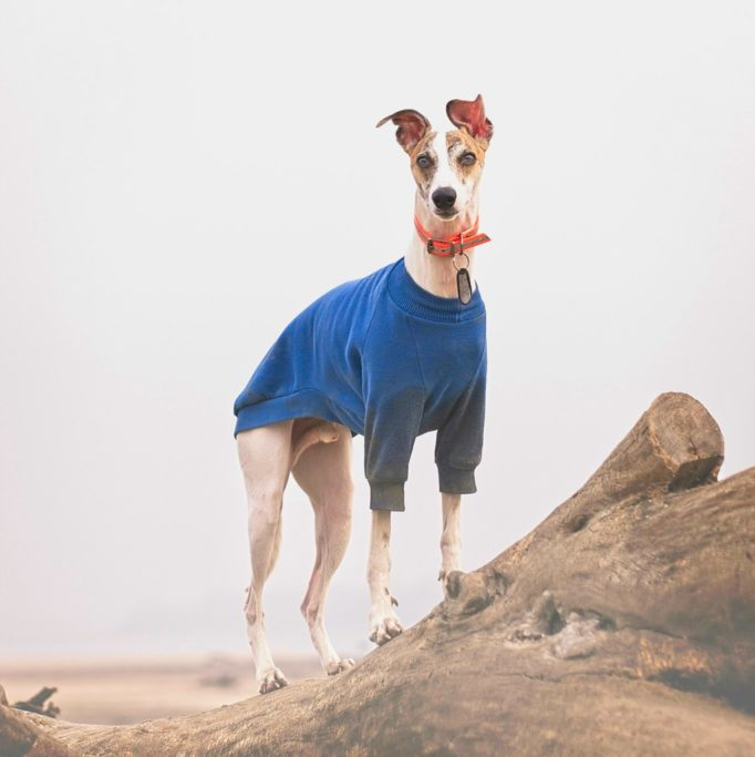 best dog jumpers for whippets