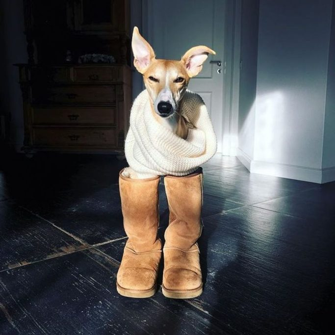 best dog boots for whippets